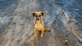 adoption d'un chien